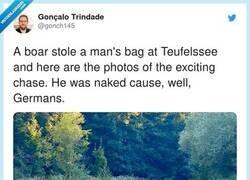 Enlace a Si habéis tenido un mal día pensad en este hombre que ha sido robado por una familia de jabalíes, por @gonch145