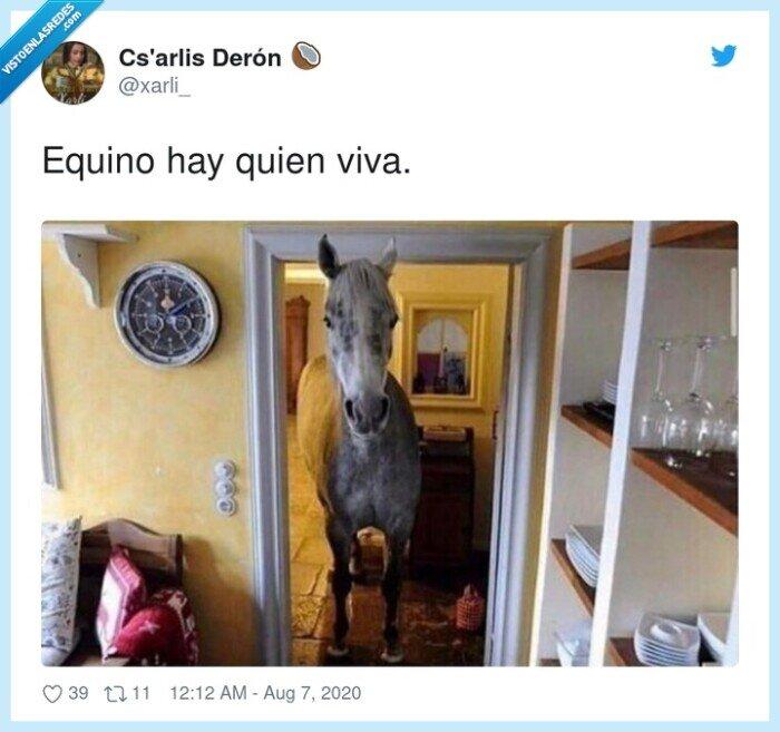 aquí,caballo,equino,quien,viva