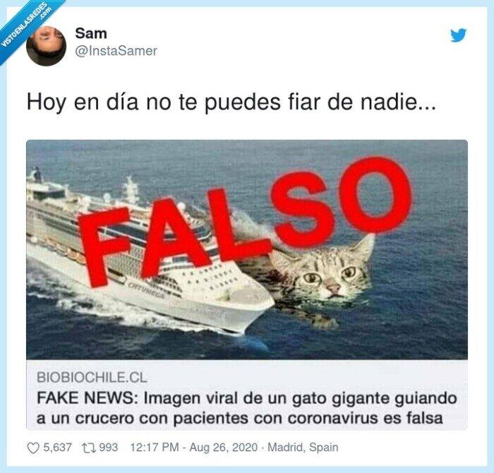 crucero,falso,gato