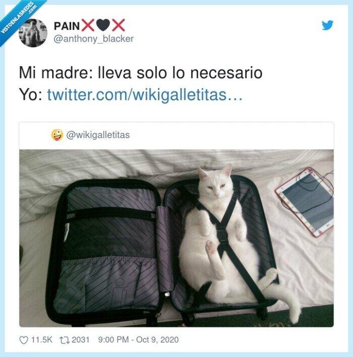 equipaje,gato,madre,necesario