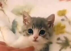 Enlace a Si estás triste ponte este vídeo del gatito limpio y te cambiará el día, por @GorditosGatitos