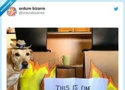 Enlace a Cuando el meme que mejor refleja nuestra actualidad se convierte en real, por @ordurebizarree
