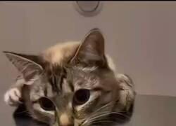 Enlace a El vídeo diario de gatitos que te va a animar el día, por @GorditosGatitos