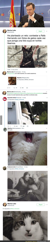 84285 - Twitter está troleando épicamente a Rafael Hernando respondiéndole con fotos de gatos