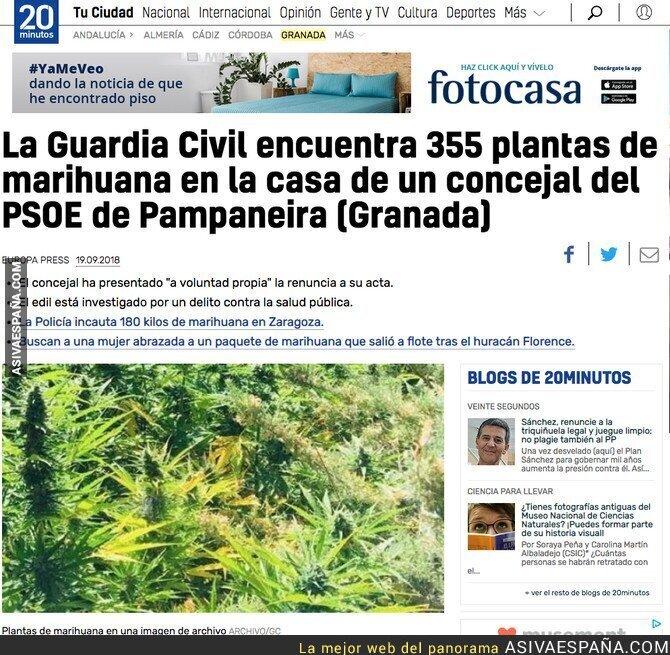 93490 - Un concejal del PSOE de una localidad de Granada tenía 355 planteas de marihuana en su casa