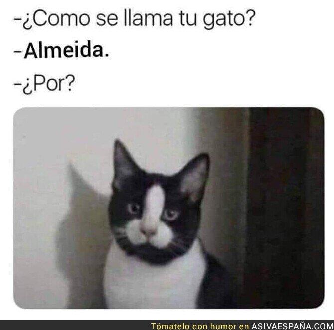128870 - El gato Almeida