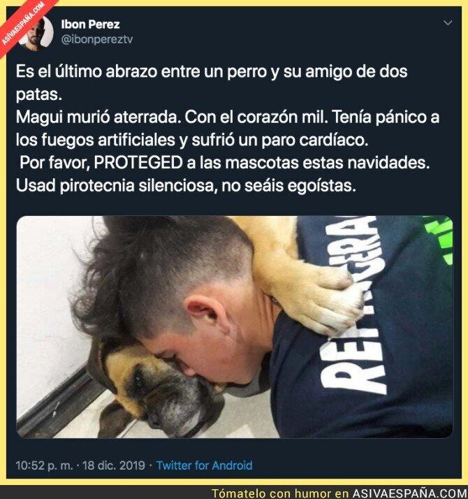 130179 - El gran miedo que sufren los perros con la pirotecnia