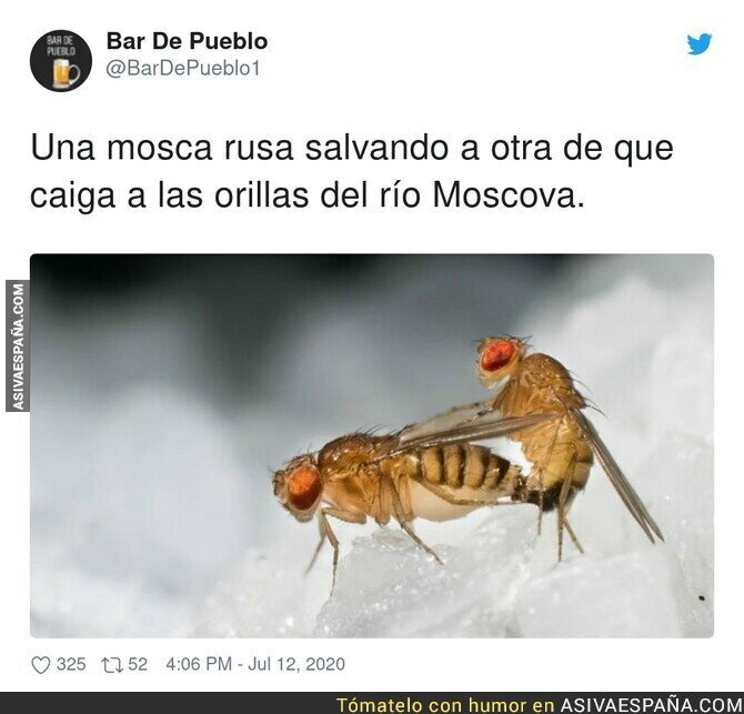 270148 - Es una mosca tigris