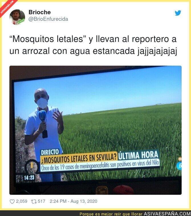 319207 - En Telecinco mandan a morir a sus reporteros