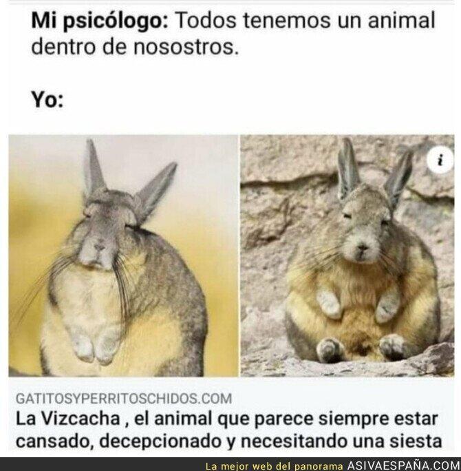 799174 - Un animal muy español