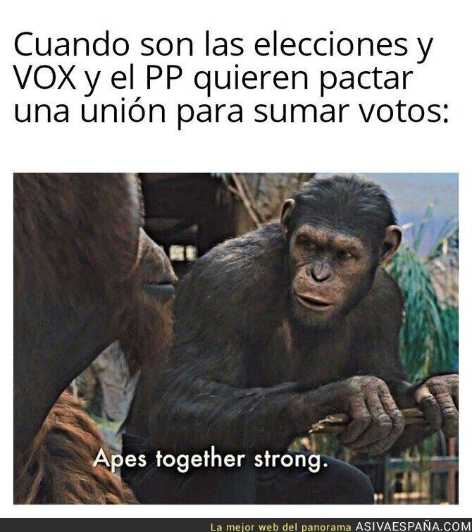 862490 - Entre simios se entienden mejor