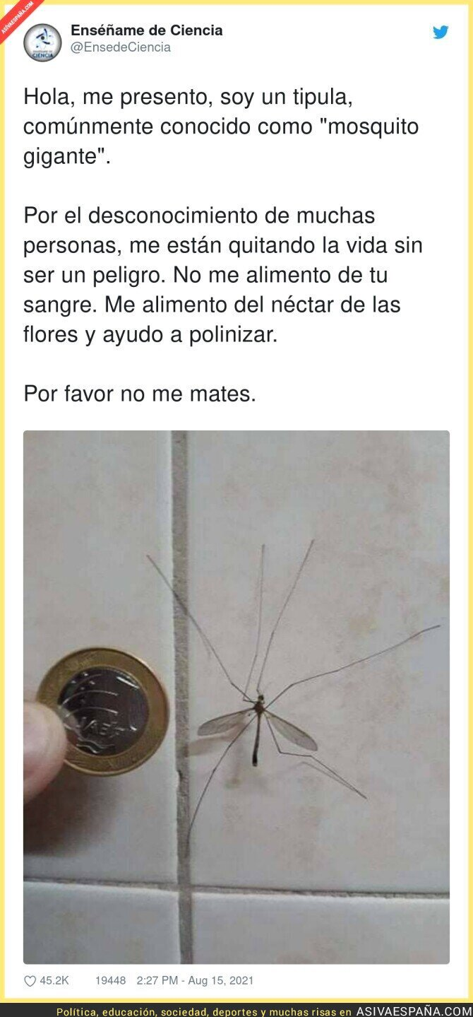 876400 - Paremos esta masacre contra estos pobre insectos