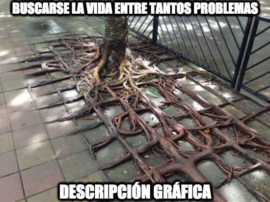 árbol,raíces,vida