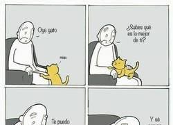 Enlace a Un gato siempre te termina traicionando