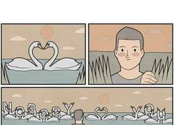Enlace a Cuando los cisnes te mandan un mensaje