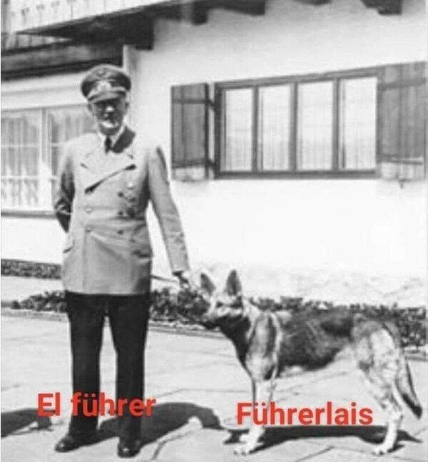 Meme_otros - Perro en alemán