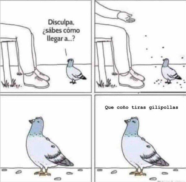 Otros - No entendemos a las palomas :(