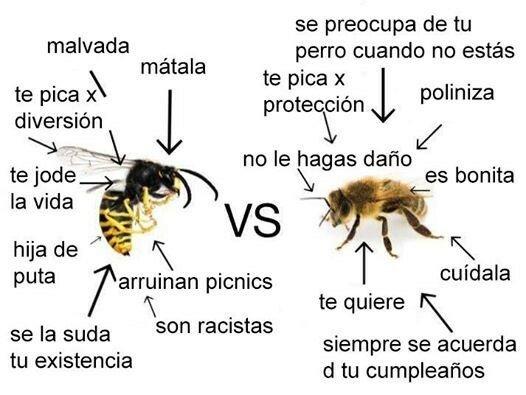 Meme_otros - La gran diferencia entre avispa y abeja