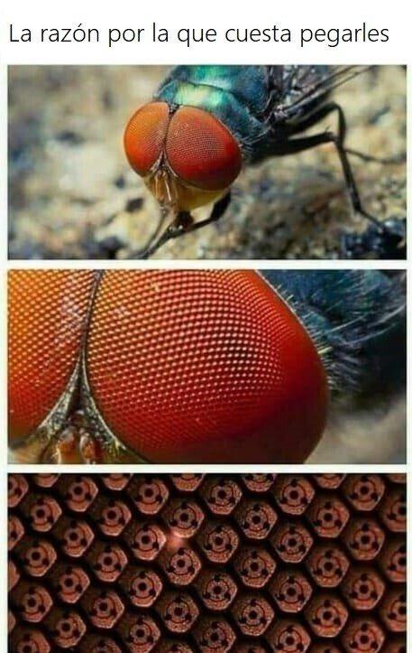 Meme_otros - El secreto de las moscas