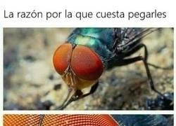 Enlace a El secreto de las moscas