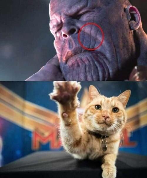 Meme_otros - El único que puede hacer un rasguño a Thanos