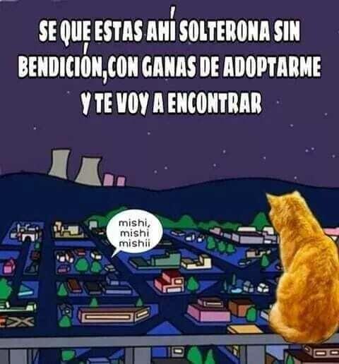 Meme_otros - La misión de los gatos