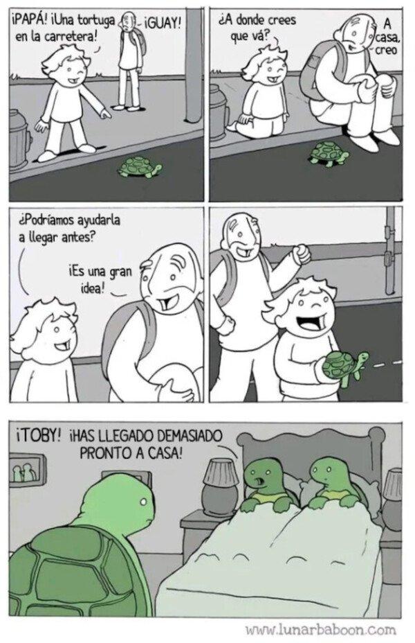 Otros - Nunca ayudes a una tortuga