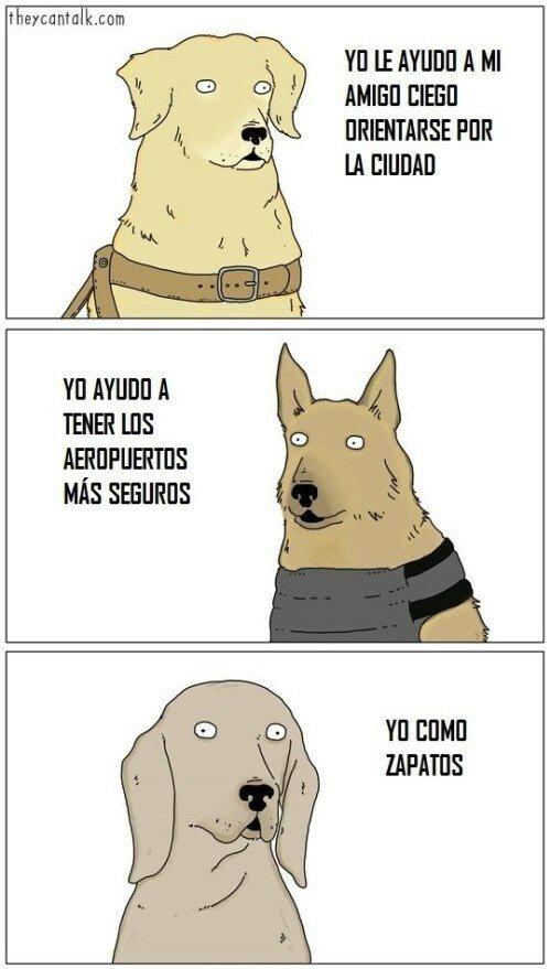 Otros - La habilidad de cada perro