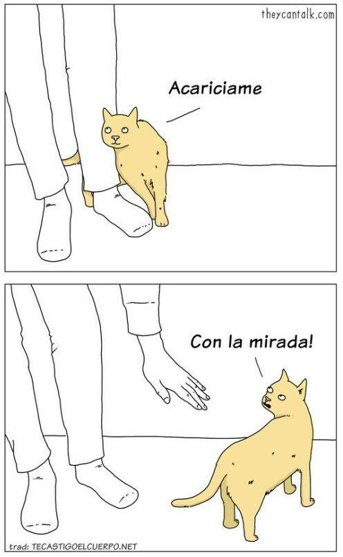 Otros - La lógica de los gatos