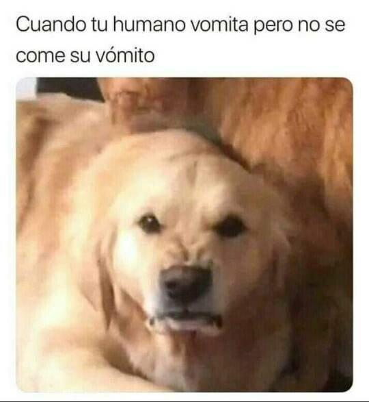 Meme_otros - Los perros no entienden a los humanos