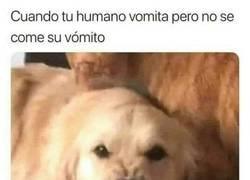 Enlace a Los perros no entienden a los humanos