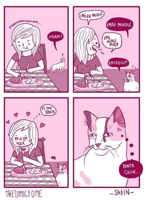 Otros - Los gatos se ríen de nuestra poca inteligencia