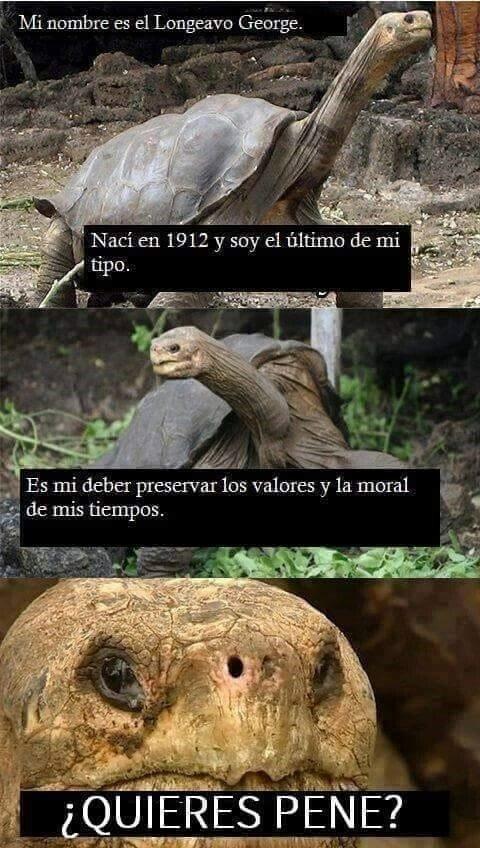 Meme_otros - Las tortugas son así