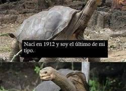 Enlace a Las tortugas son así