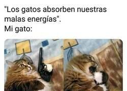 Enlace a Los gatos son demasiado listos