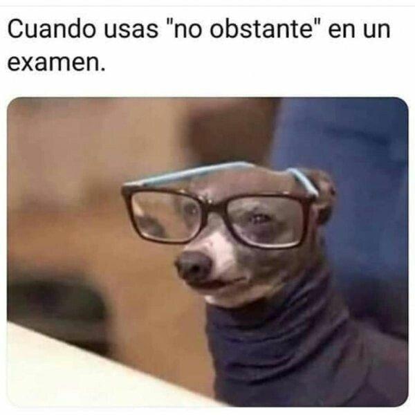 Meme_otros - Mi IQ ha aumentado en un 200%