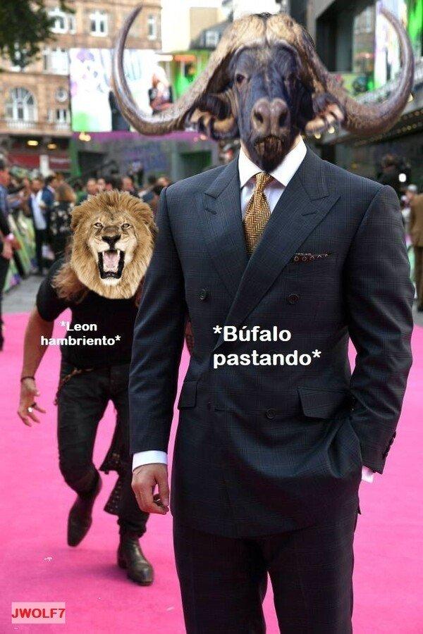 comida,EscuseMeWhatTheFuck,león
