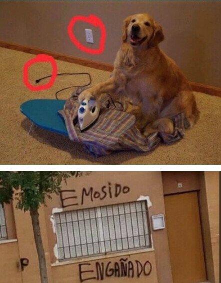 Meme_otros - No juegues con los sentimientos de un perrete