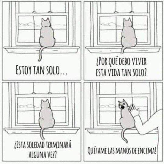 Otros - La eterna soledad de un gato