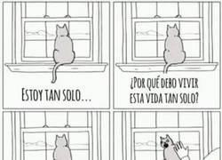 Enlace a La eterna soledad de un gato