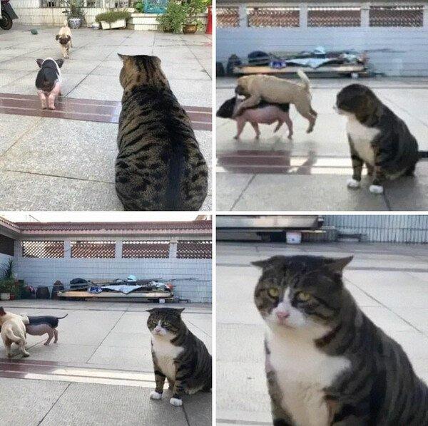 La_cara_que_pones_cuando - Cuando tu amigo va con la más cerda