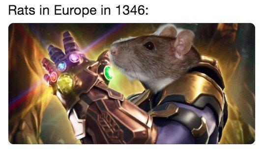 Meme_otros - Las ratas dominaron el mundo antes