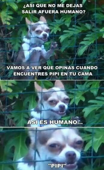 Meme_otros - Los perros son diabólicos