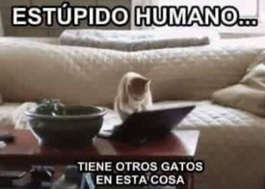 Meme_otros - Gatos celosos