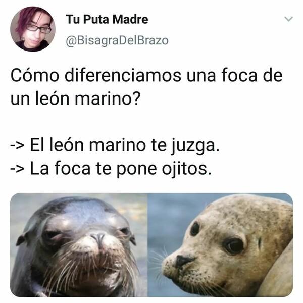 Meme_otros - Diferencias entre león marina y foca
