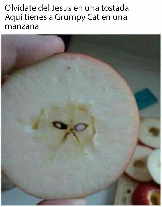Meme_otros - Grumpy Cat en una manzana, maldiciones para ti