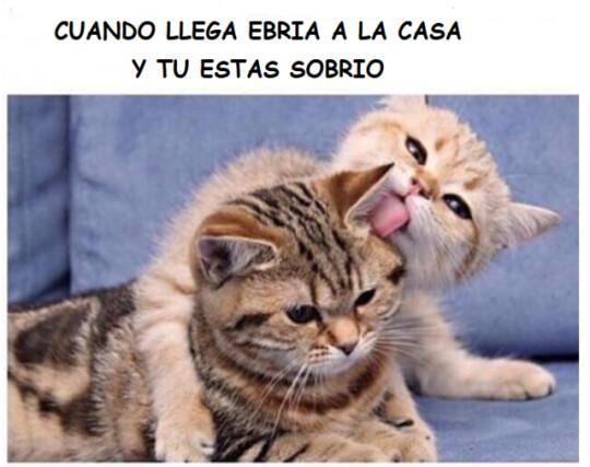 Meme_otros - Sobrio vs ebrio