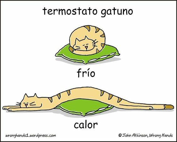 Otros - Si tienes un gato, tienes un termostato