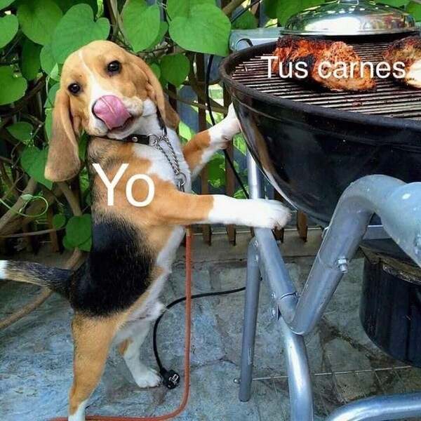 Meme_otros - Carnaza