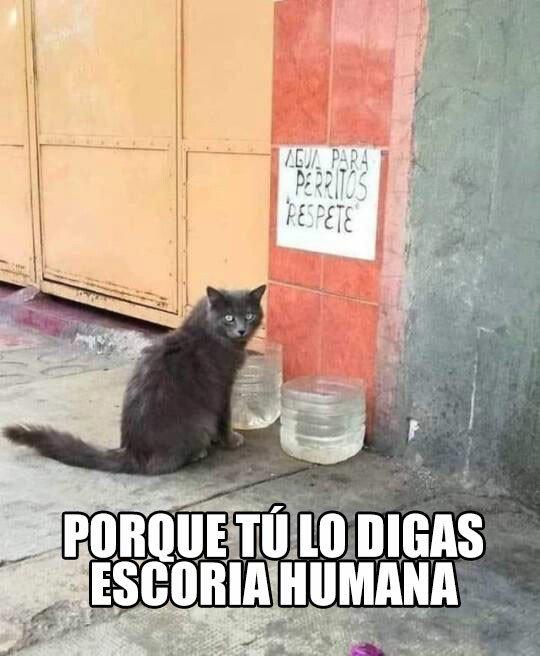 Meme_otros - A mi me vas a decir lo que tengo que hacer, ¿no has visto que soy un gato?